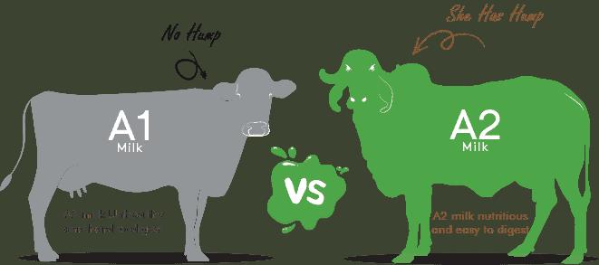 A1 A2 Milk Comparison