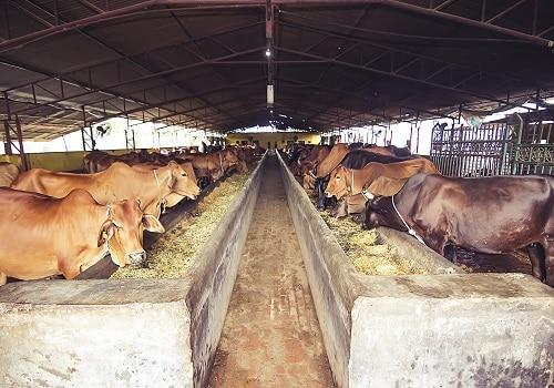 Adya Organics Farm