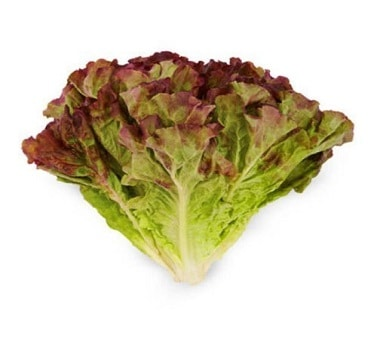 leafy-lettuce-red